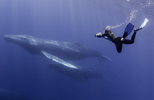 День подводного фотографа