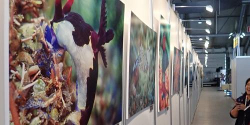 Выставка Подводной Фотографии MDS 2019