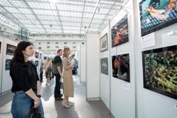 Выставка Подводной Фотографии