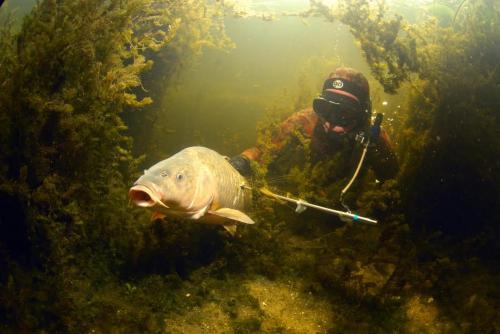 Пресноводная подводная охота