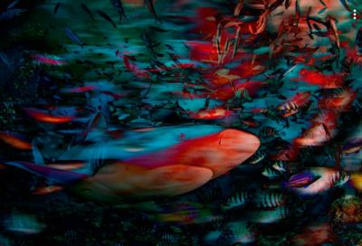 Подводные фантазии