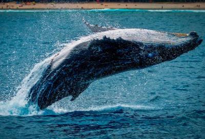 Программы whale watching в Индонезии