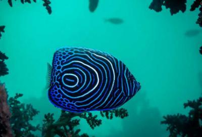 Фотоконкурс подводного портала Тетис