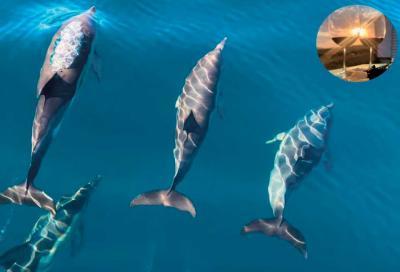 Эногастрономический туризм для дайверов в Крыму