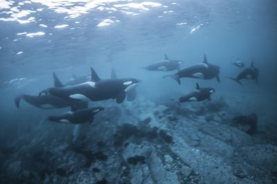 Whale Watching в России, дайвинг экспедиция на морских леопардов в Антарктиду