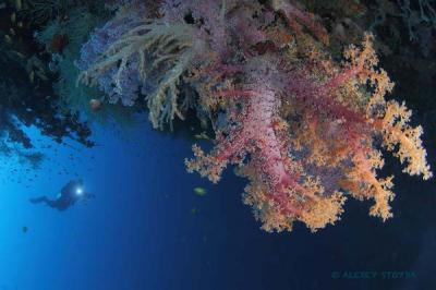Philippines: The Heart of Diving in Asia