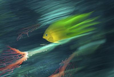 Подводное Арт-фото. Необычные техники и новые приемы