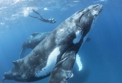 Ныряем с китами