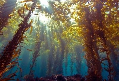 Тайны подводных лесов