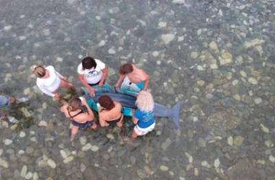 Вернем дельфинам море. Водные люди в помощь морю, дельфинам и китам