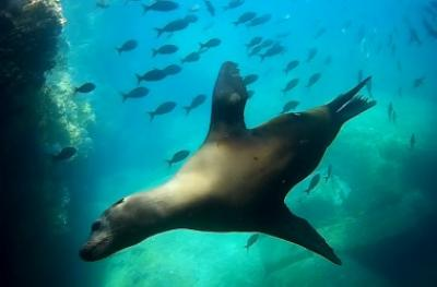 Море Кортеса - всемирный аквариум!