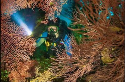 Мастер-класс: особенности обработки подводной фотографии