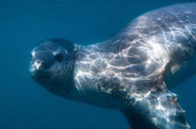 Подводная фотосъёмка морских млекопитающих