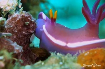 Многообразие подводной жизни о. Малапаскуа (Филиппины)