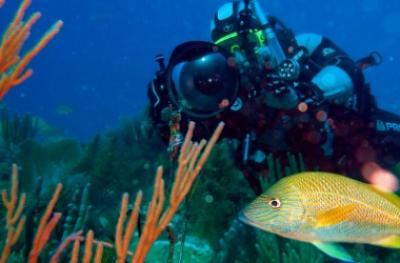 Мастер-класс: принципы и правила аквафотографии