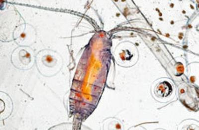 Микроскопия: мир в капле воды — охота за невидимками