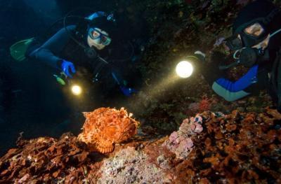 Микроскопия: свет и цвет – на суше и под водой
