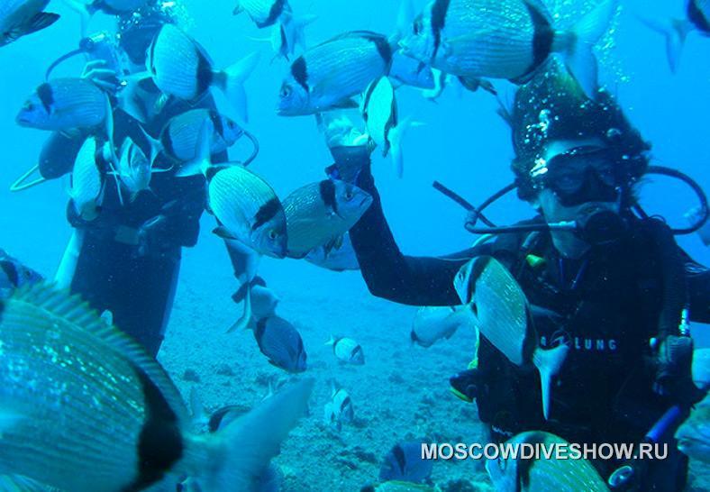 Спецпредложение дайв-клуба «ABC Dive» (Кипр) - скидка 10% + ...