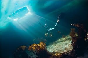 Moscow Dive Show в журнале «Русский репортёр»