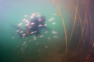 We meet new participant - Sychiki dive-center.