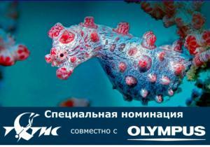 Конкурс подводной фотографии от Тетис!