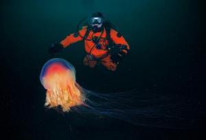 Навигатор дайвера на Moscow Dive Show