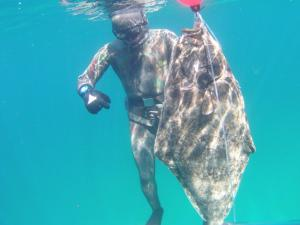 Trophy spearfishing and fishing in Norway.