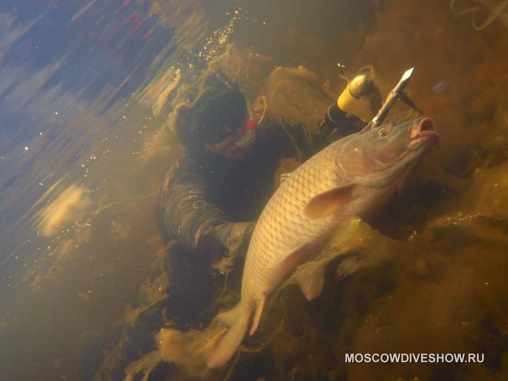 подводная охота на карпа в прудах видео ночью